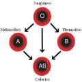 Distribuição do grupo ABO na tipologia Hipócrates e Galeno_