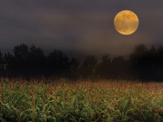 MOON LIT CORN