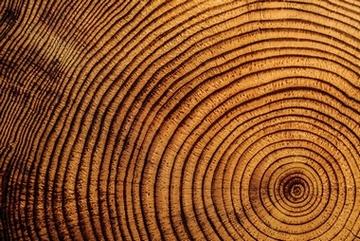 tree-rings-