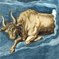 costellazioni-taurus-settecenteschi-colorati-a-mano-incisione-di-constellational-taurus-il-toro-basato-sull-illuminazione-nel-ix-secolo-a